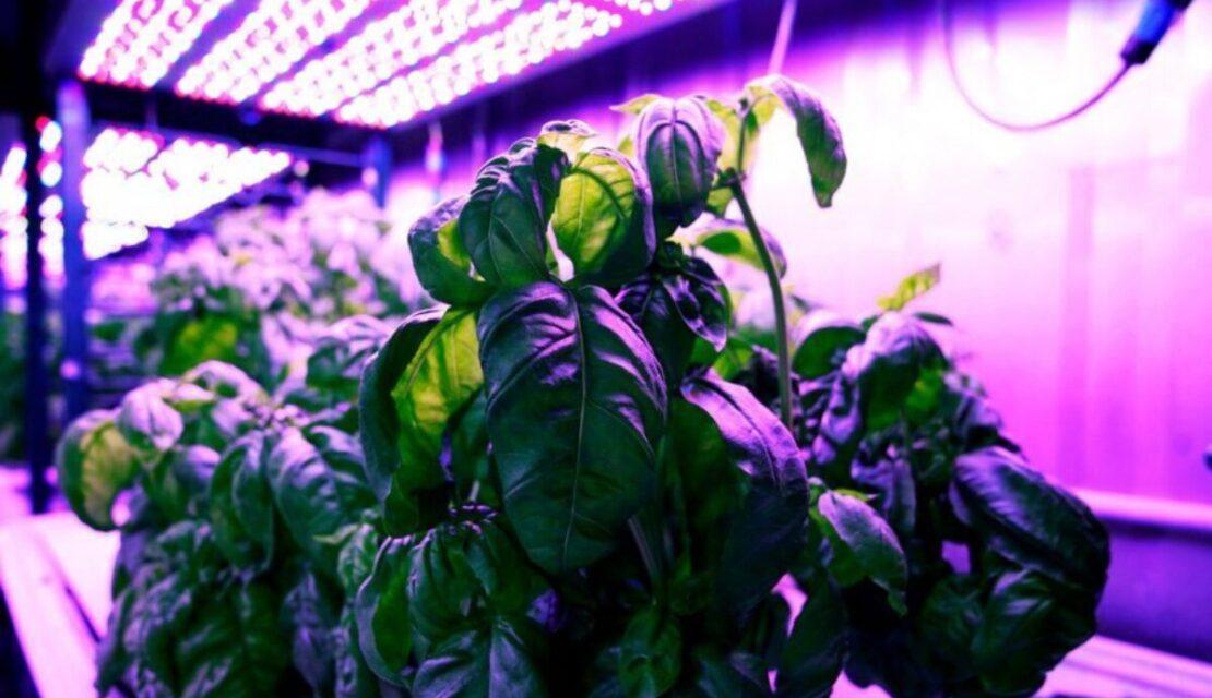 Plant on shelf under grow lights