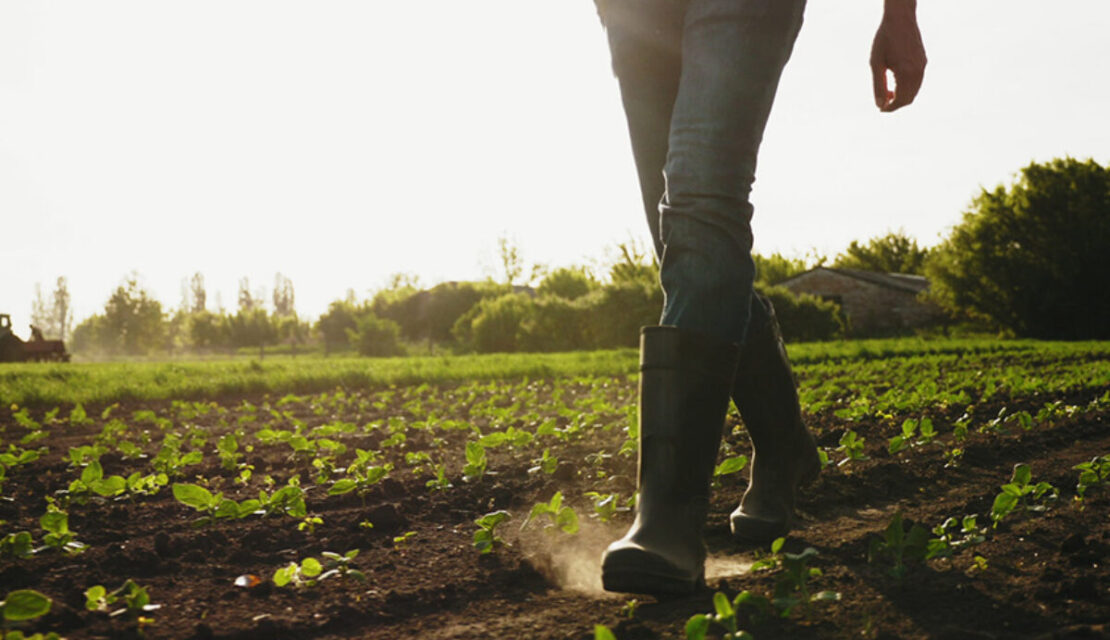 Person wearing rain boots walking through farm field of plants growing